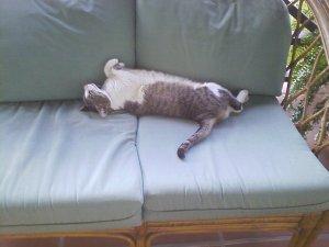 cats 003